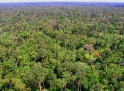 Hutan Harapan Jambi