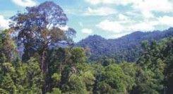 Taman Nasional Bukit Tigapuluh
