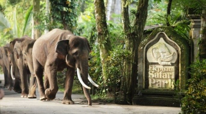 harga tiket Bali Elephant Safari Park Taro (ADMISSION ONLY)