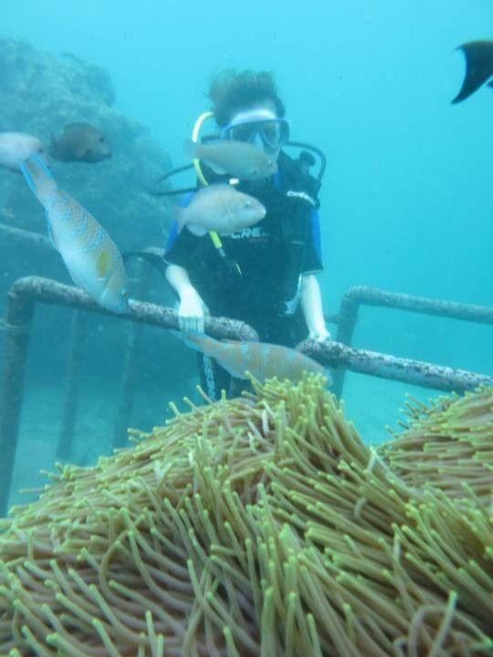 Beginner's Diving Activity