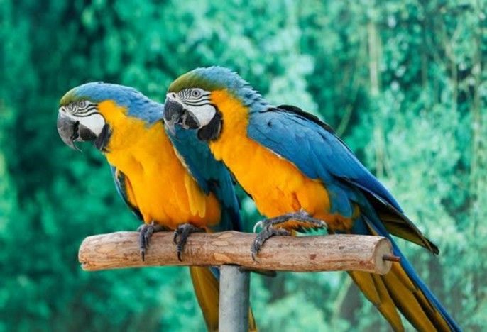 harga tiket Creek Park Exotic Bird Show Ticket