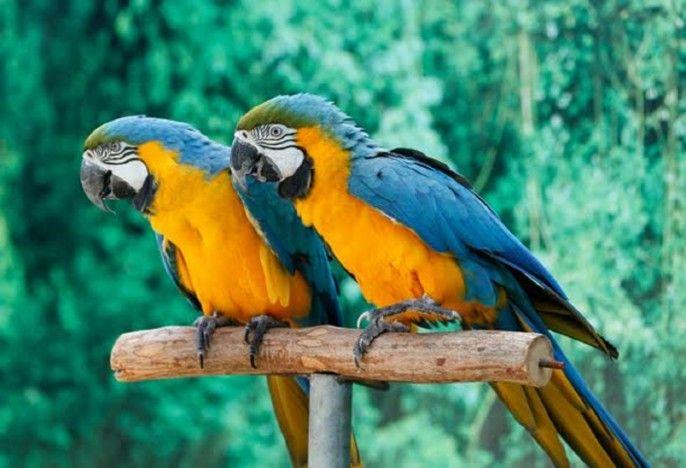 harga tiket Creek Park Exotic Bird Show Ticket