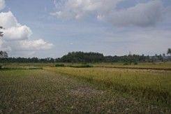 Desa Gilangharjo