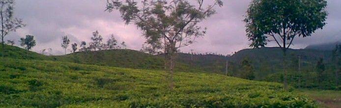 Sambawa Tea Plantation