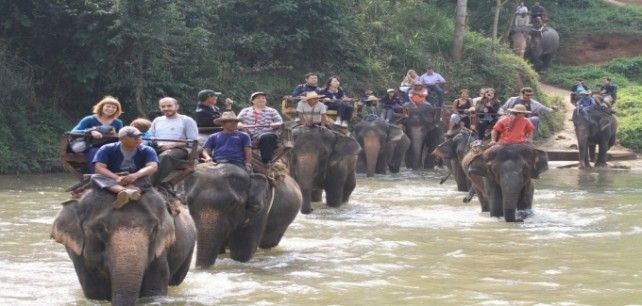Full-day Maetaman Elephant Safari Tour (Join in Tour)
