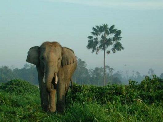 Sekolah Gajah Perangai