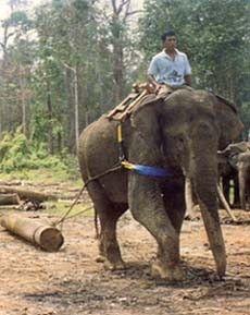 Hutan Lindung dan Pusat Pelatihan Gajah - Bengkalis