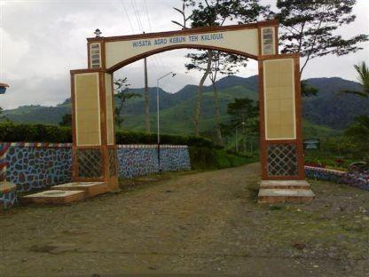 Agro wisata Kaligua