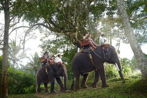 Half-day of Trekking Adventure on Board the Elephant