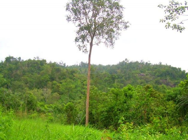 Hutan Wisata Tuatunu