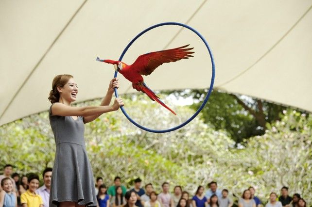 Jurong Bird Park: Admission with Tram & Lunch with Parrots
