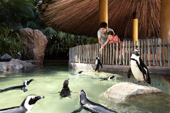 Jurong Bird Park: Admission with Tram Ride & Lunch at Curry Gardenn *FREE! King Cup Ice Cream