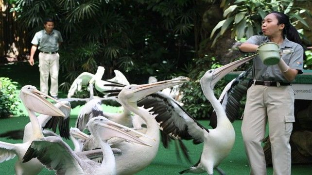 Jurong Bird Park: Lunch with Parrots Add-on