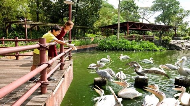 Jurong Bird Park with Two-way Transfer