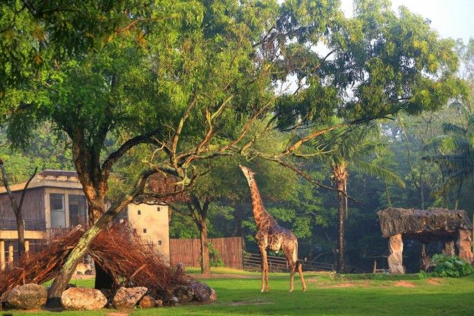 harga tiket Khao Kheow Open Zoo