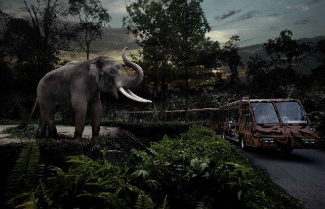 Night Safari Fixed date Admission with English Tram Ride