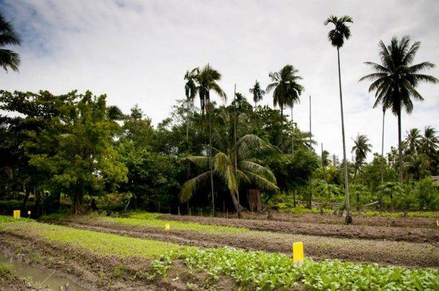 Organic Farm Tour and Buffet Lunch at Sampran Riverside (Join Tour)