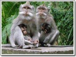 Hutan Monyet Pusuk