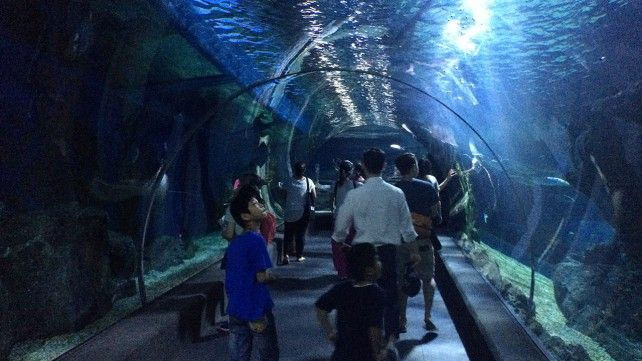 Sea Life Bangkok Ocean World Admission Ticket